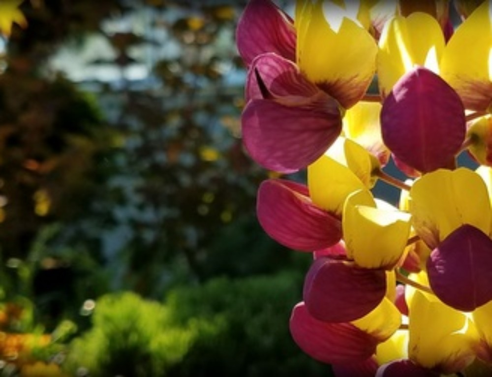 Enjoy Early Summer Color & A Thriving Yard