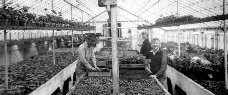 Vander Giessen Nursery history