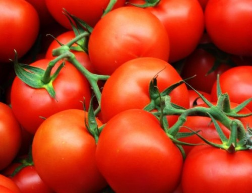 Coming Soon–Tomato Days!