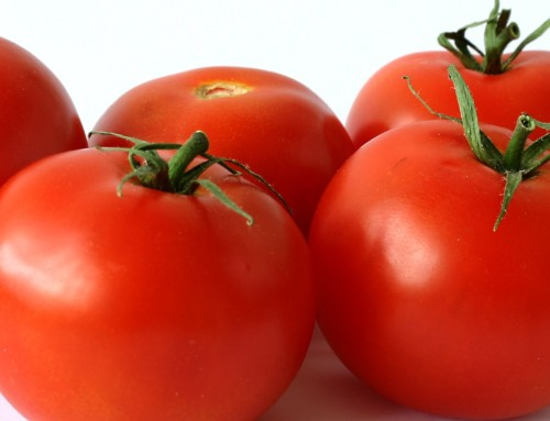 Tomato Starts Just 49 Cents