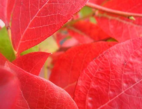 Fall Clearance: 40% off Shrubs, Trees & Perennials