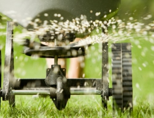 Tips to Get Your Lawn & Garden Ready For Winter